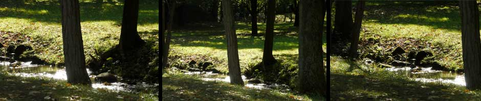 A view of Carpenter's Brook
