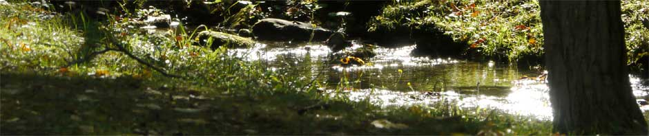 Close-up of Carpenter's Brook